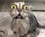 Да къпем котката си
