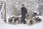 Разходка на много кучета