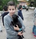Дарение за кучета Плевен