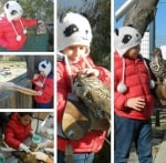 Дарение за ранените диви животни