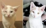 Дария преди и след приюта