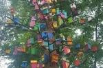 Дърво в кв. Надежда (София) се превърна в прекрасен дом за много диви птици