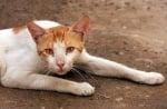 Деца от пловдивски квартал системно измъчват и подпалват котенца