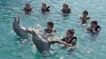Делфините обичат хората