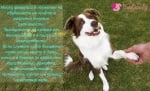 Февруари - Месец на обучението на кучета