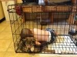 Дете и куче в клетка