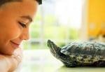 Дете с костенурка за домашен любимец