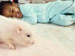 Дете си играе с прасенце