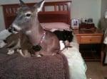 Дили с котката Спаз