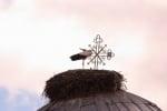 Бял щъркел върху църква