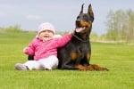 Доберман с бебе