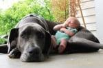 Дог с бебе