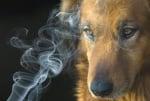 Домашните любимци на пушачи са предразположени към Рак