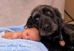 Дратхаар с бебе