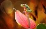 Дъждовно жабче в цвете