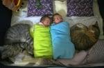 Две бебета с две котки