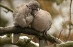 Две гълъбчета се прегръщат