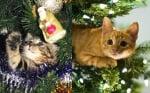 Две котета в коледни елхи