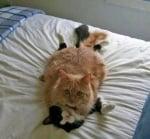 Две котки лежат една върху друга