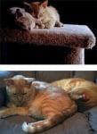 Две котки спят заедно