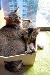 Две котки спят в кутия