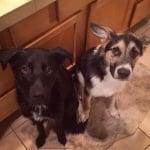Две осиновени кученца