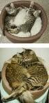 Две шарени котета