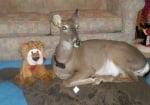 Еленчето Дили с плюшена играчка лъвче