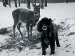 Еленчето Дили слиза заедно с кучето Лейди