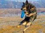 Енергичност на кучето