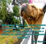 Факт за кучето в колата