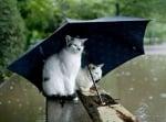"""""""О-о-ох  любими, докога ще вали?"""""""