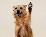 """Фондация """"Четири лапи"""" стартира кампания за чипиране и кастриране на кучета"""
