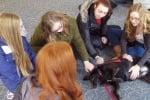 Галене на куче срещу стрес