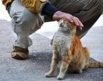 Галяне на котка