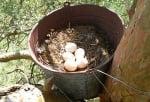 Гнездо от стара кофа