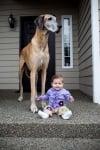 Голям дог с бебе на веранда