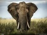 Голям слон