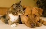 Голяма котка с голямо куче