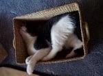 Голяма котка спи в малка кутия