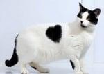 Голяма котка сърце