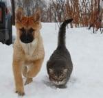 Голяма сива котка с малко куче