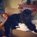 Голямо черно куче