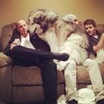 Голямо домашно куче