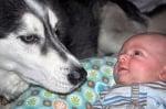 Голямо хъски с бебе
