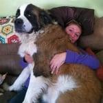 Голямо куче санбернар