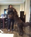 Голямо рошаво куче