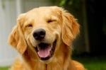 Усмивко