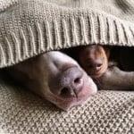 Харлоу и Индиана спят зависити заедно