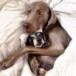 Харлоу и Сейдж спят прегърнати заедно